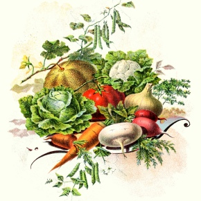 ★ Victorian Autumn Vegetables Illustration